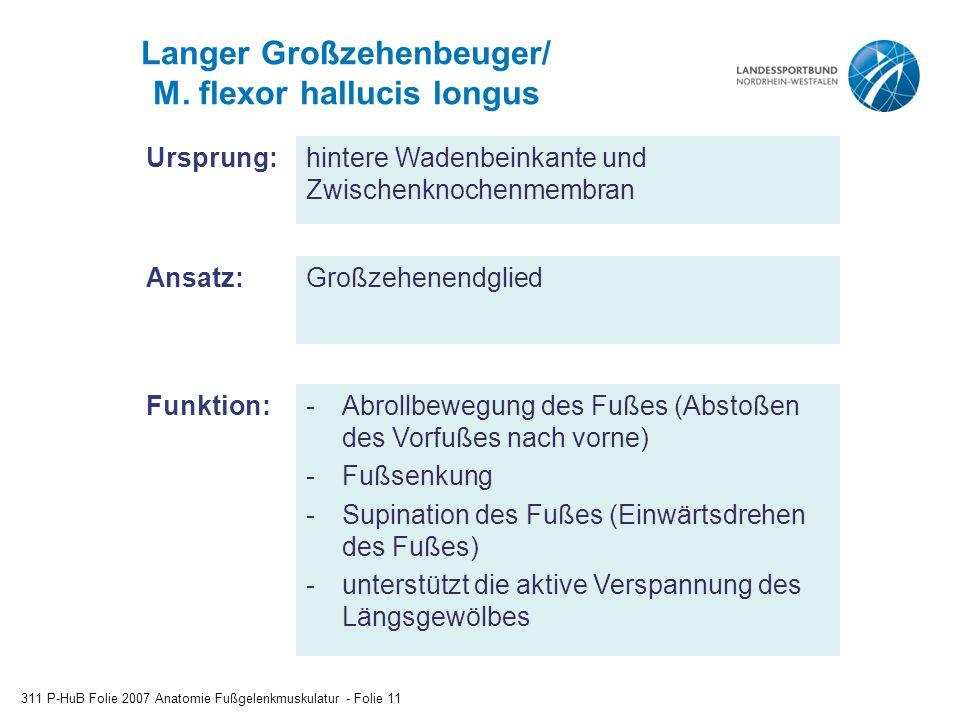 Langer Großzehenbeuger/ M.
