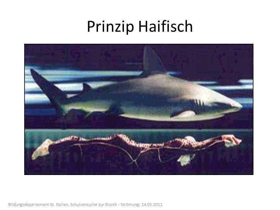Haifischhaut und Speedo- Schwimmanzug Bildungsdepartement St.