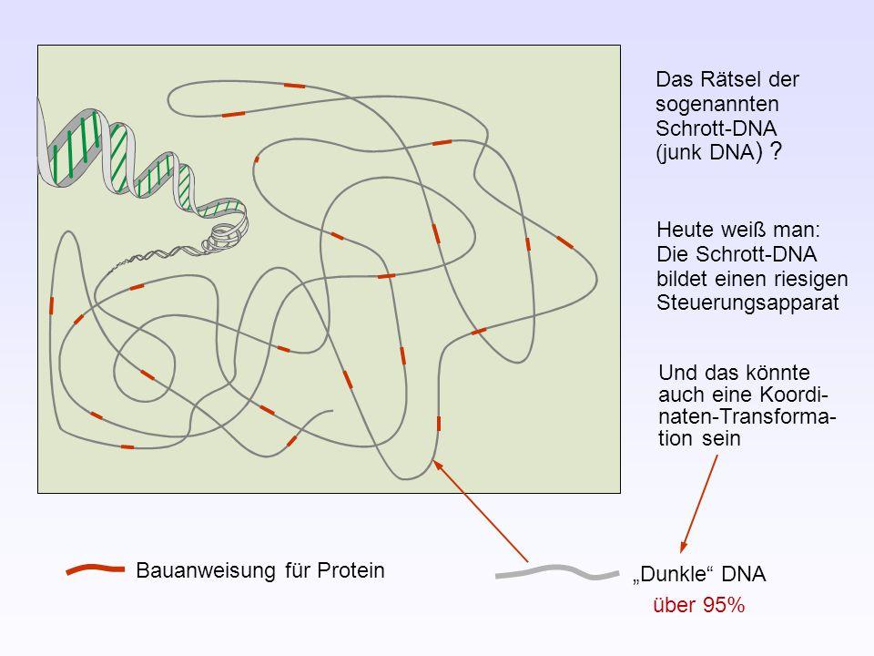"""Bauanweisung für Protein """"Dunkle DNA Das Rätsel der sogenannten Schrott-DNA (junk DNA ) ."""