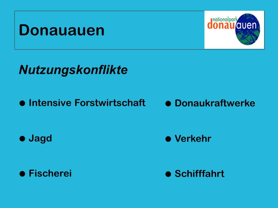 Donauauen ● Intensive Forstwirtschaft ● Jagd ● Fischerei ● Donaukraftwerke ● Verkehr ● Schifffahrt Nutzungskonflikte