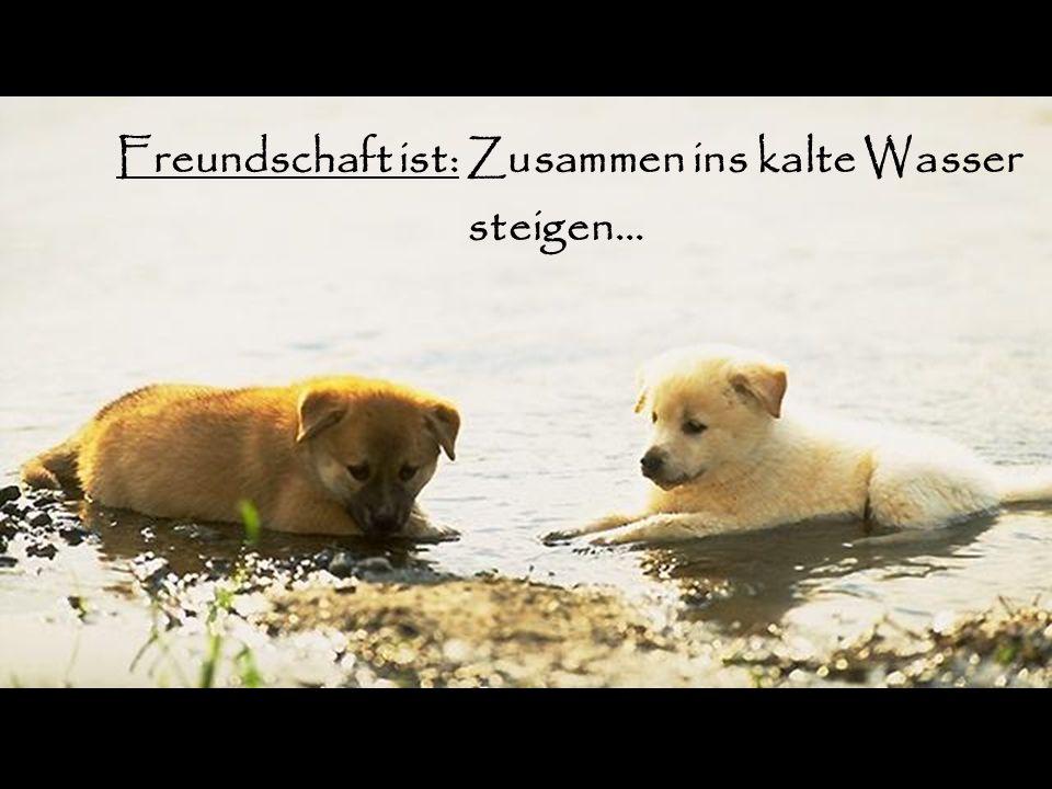 Freundschaft ist: Zusammen ins kalte Wasser steigen…