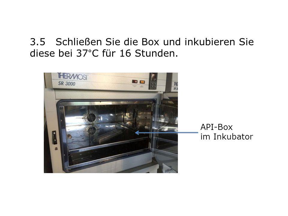 3.5 Schließen Sie die Box und inkubieren Sie diese bei 37°C für 16 Stunden. API-Box im Inkubator
