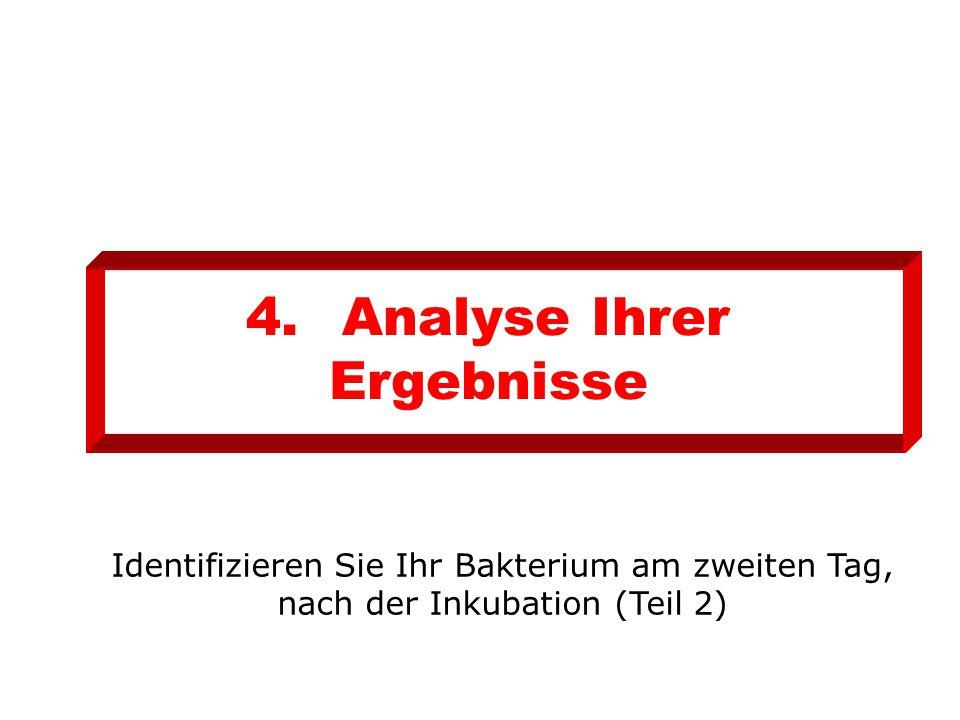 4.Analyse Ihrer Ergebnisse Identifizieren Sie Ihr Bakterium am zweiten Tag, nach der Inkubation (Teil 2)