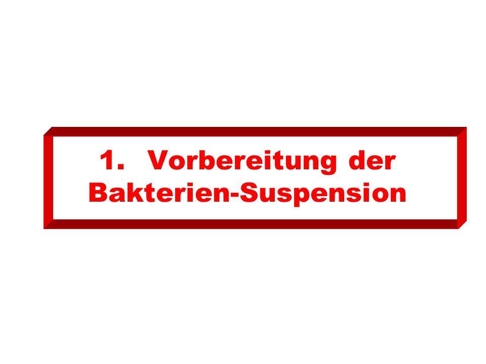 1.Vorbereitung der Bakterien-Suspension