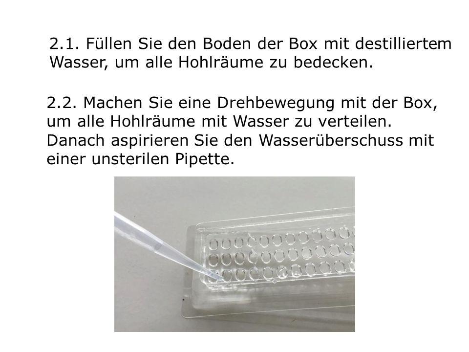 2.1. Füllen Sie den Boden der Box mit destilliertem Wasser, um alle Hohlräume zu bedecken.