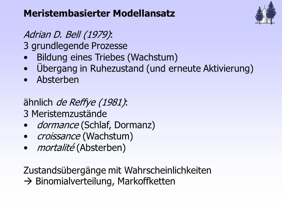 Meristembasierter Modellansatz Adrian D.