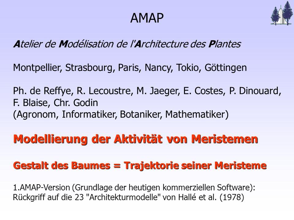 AMAP Atelier de Modélisation de l Architecture des Plantes Montpellier, Strasbourg, Paris, Nancy, Tokio, Göttingen Ph.