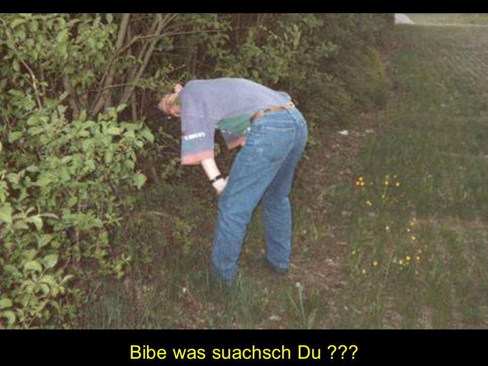 Bibe was suachsch Du ???