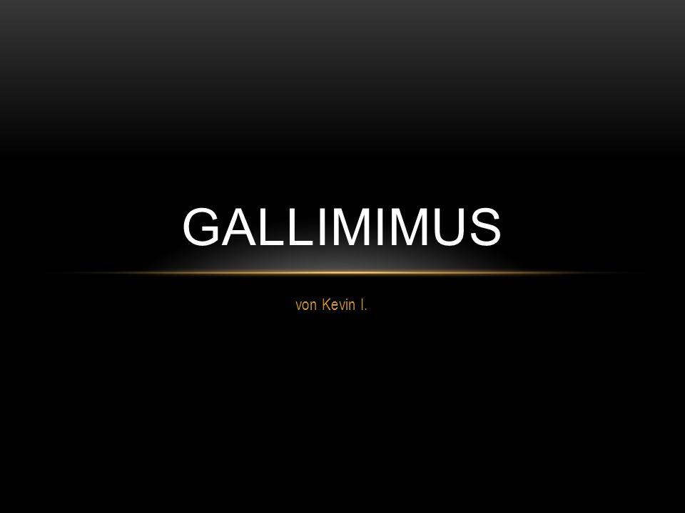 von Kevin I. GALLIMIMUS