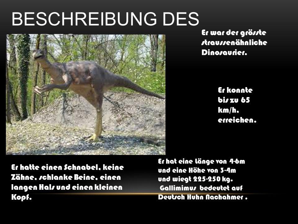 Er war der grösste straussenähnliche Dinosaurier. Er konnte bis zu 65 km/h, erreichen. BESCHREIBUNG DES TIERES Er hatte einen Schnabel, keine Zähne, s