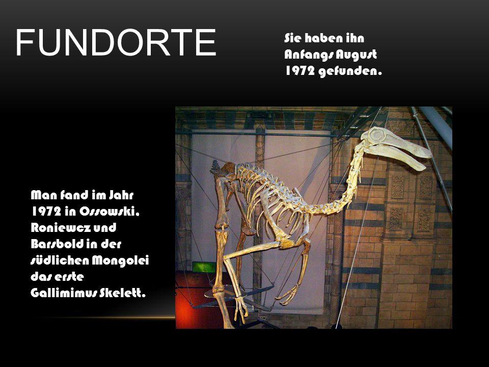 FUNDORTE Man fand im Jahr 1972 in Ossowski, Roniewcz und Barsbold in der südlichen Mongolei das erste Gallimimus Skelett. Sie haben ihn Anfangs August