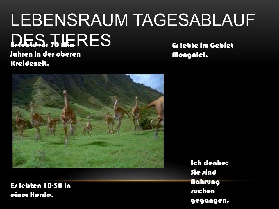 LEBENSRAUM TAGESABLAUF DES TIERES Er lebte vor 70 Mio Jahren in der oberen Kreidezeit. Er lebte im Gebiet Mongolei. Es lebten 10-50 in einer Herde. Ic