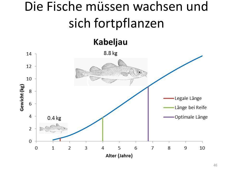 Die Fische müssen wachsen und sich fortpflanzen 46