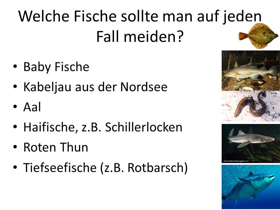 Welche Fische sollte man auf jeden Fall meiden? Baby Fische Kabeljau aus der Nordsee Aal Haifische, z.B. Schillerlocken Roten Thun Tiefseefische (z.B.