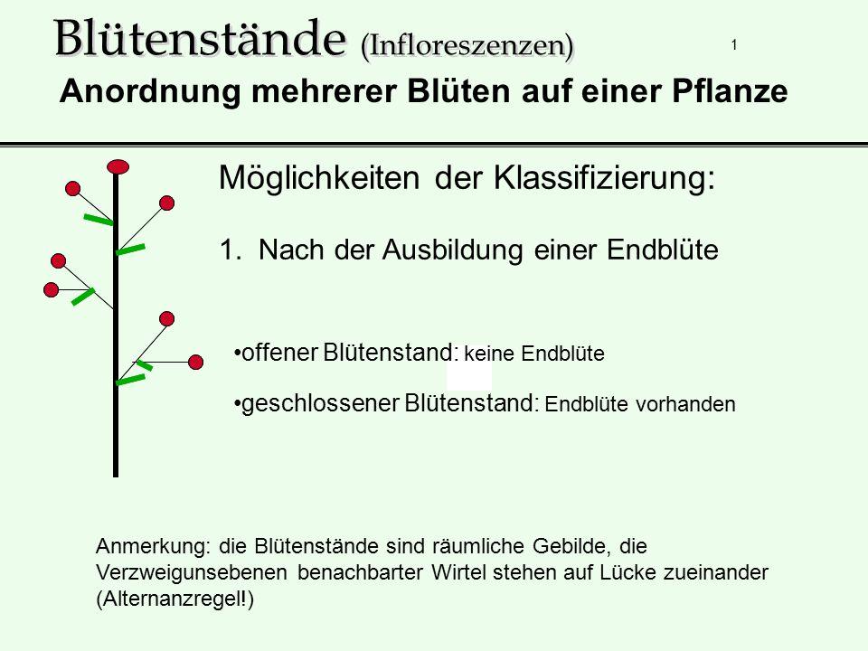 1 Blütenstände (Infloreszenzen) Möglichkeiten der Klassifizierung: 1. Nach der Ausbildung einer Endblüte Anordnung mehrerer Blüten auf einer Pflanze o