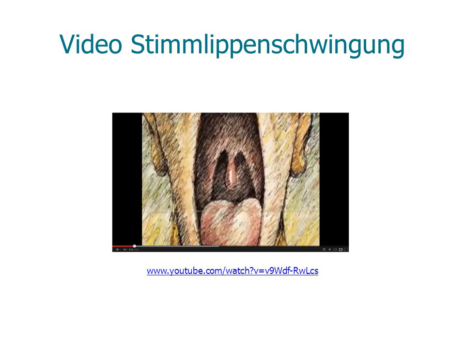 Video Stimmlippenschwingung www.youtube.com/watch?v=v9Wdf-RwLcs