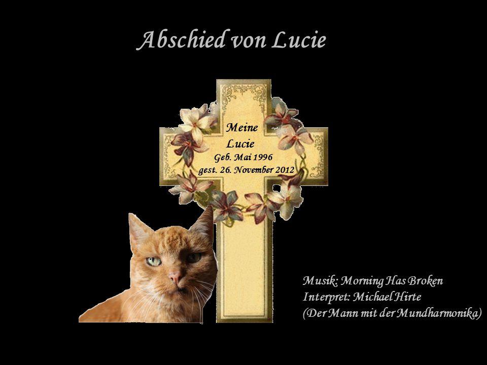 Meine liebe Lucie, du verlebtes 15 schöne Jahre bei deiner Katzenhalterin Frau Hilmer.