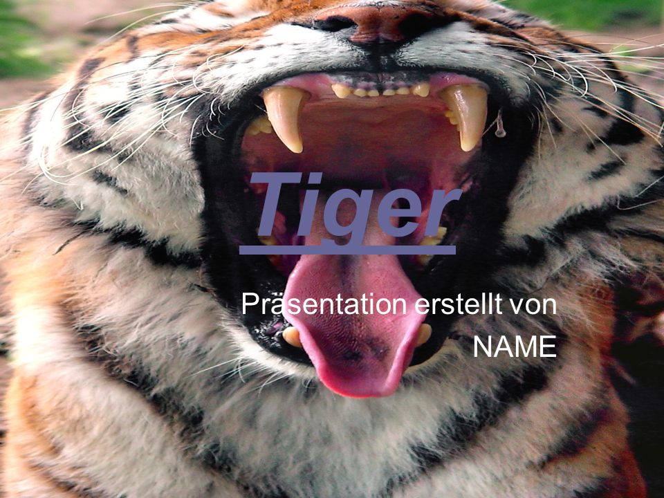 Tiger Präsentation erstellt von NAME