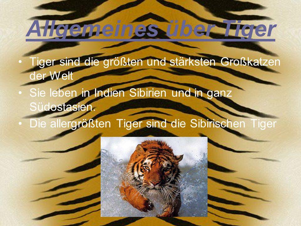 Arten der Tiger König- oder Bengal- Tiger Sibirischer Tiger Sumatra Tiger Südchinesischer Tiger Indochinesischer Tiger
