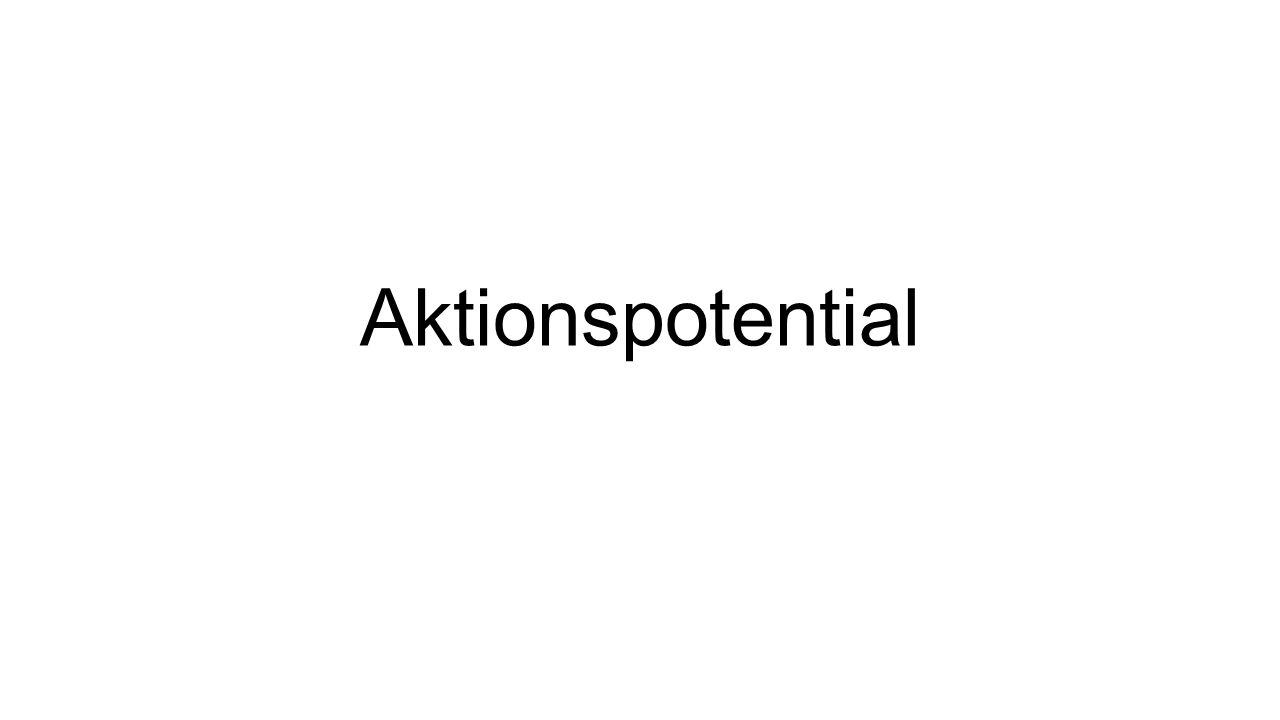 Zell- mem- bran Na-Kanal K-Kanal Na-K-Pumpe Ruhepotential Außerhalb der Nervenzelle Innerhalb der Nervenzelle K+K+ K+K+ K+K+ K+K+ K+K+ K+K+ K+K+ K+K+ K+K+ K+K+ Na + A - Cl - A - Cl -