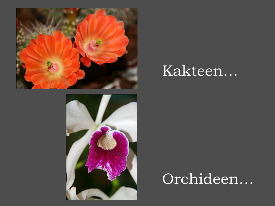 Kakteen… Orchideen…