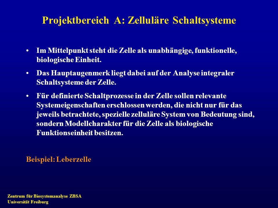 Zentrum für Biosystemanalyse ZBSA Universität Freiburg Projektbereich A: Zelluläre Schaltsysteme Im Mittelpunkt steht die Zelle als unabhängige, funkt