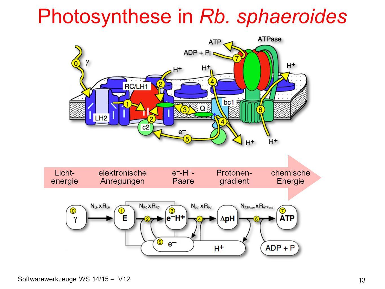 Softwarewerkzeuge WS 14/15 – V12 13 Photosynthese in Rb. sphaeroides Licht- energie elektronische Anregungen e – -H + - Paare Protonen- gradient chemi