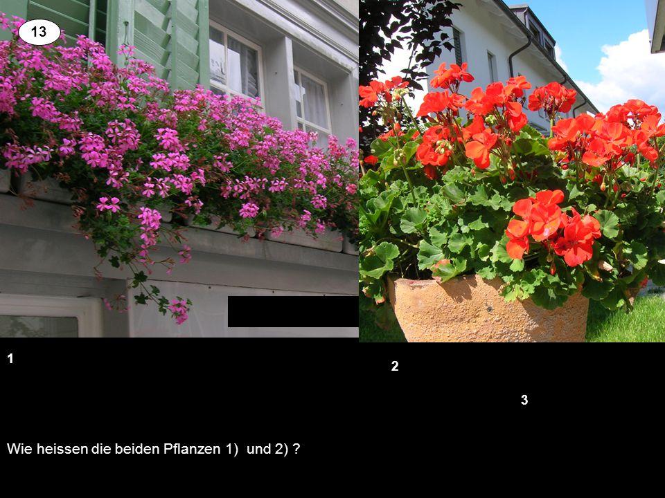 Wie heissen die beiden Pflanzen 1) und 2) ? 1 3 2 13