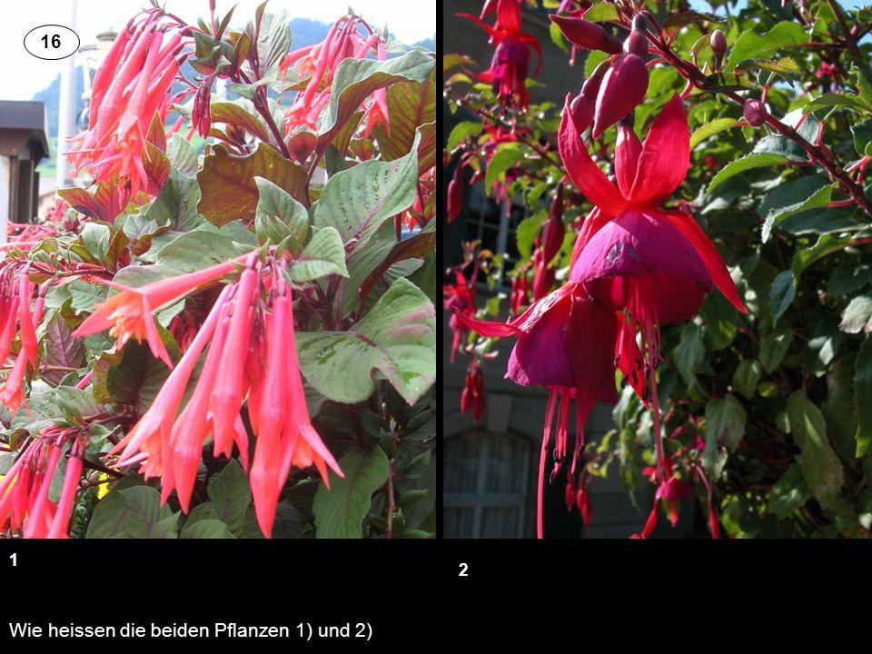 Wie heissen die beiden Pflanzen 1) und 2) 1 2 16