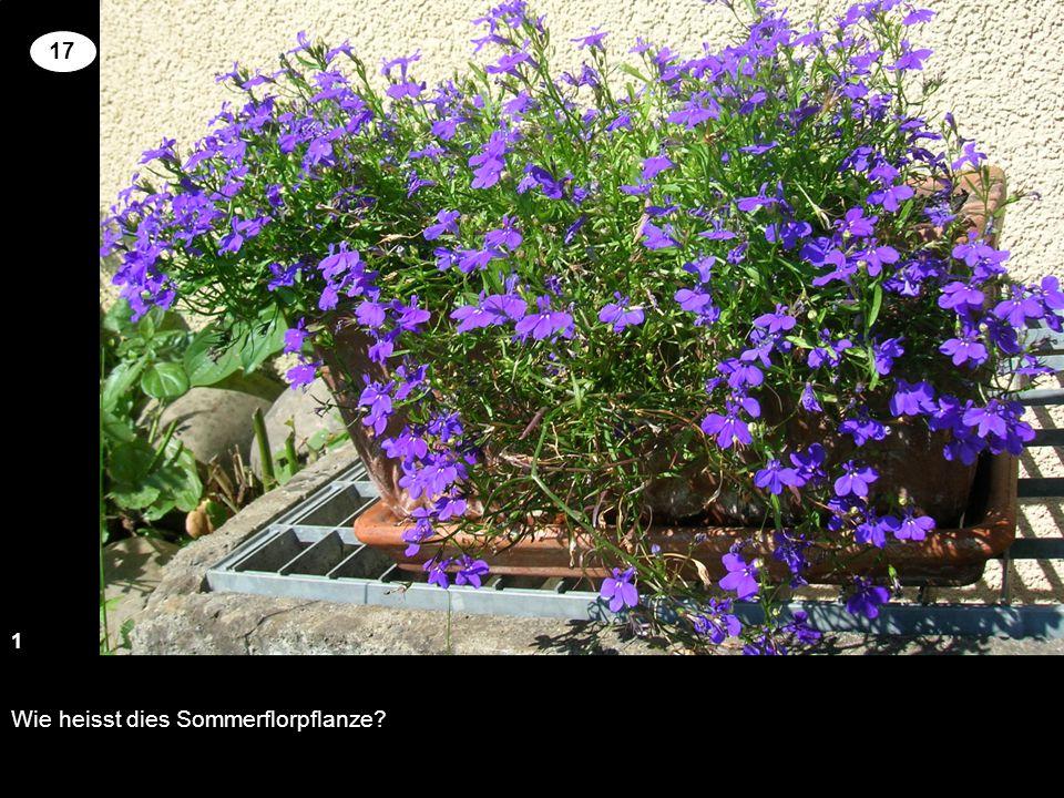 Wie heisst dies Sommerflorpflanze? 13 2 17 Setzen Sie an der richtigen Stelle die Kreuze um für die genannten Pflanzen richtige Blütenfarbe und Wuchsh