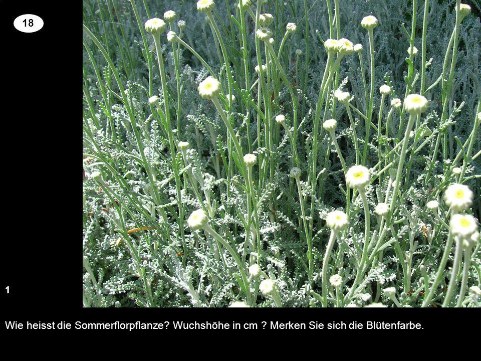 Wie heisst die Sommerflorpflanze? Wuchshöhe in cm ? Merken Sie sich die Blütenfarbe. 13 2 18 Setzen Sie an der richtigen Stelle die Kreuze um für die