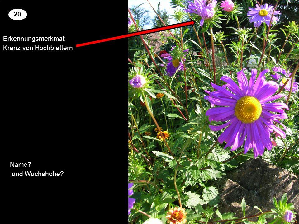 Erkennungsmerkmal: Kranz von Hochblättern 2 20 Setzen Sie an der richtigen Stelle die Kreuze um für die genannten Pflanzen richtige Blütenfarbe und Wuchshöhe zu zuordnen.