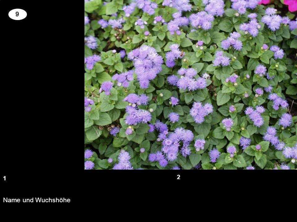 Name und Wuchshöhe 13 2 9 Setzen Sie an der richtigen Stelle die Kreuze um für die genannten Pflanzen richtige Blütenfarbe und Wuchshöhe zu zuordnen.