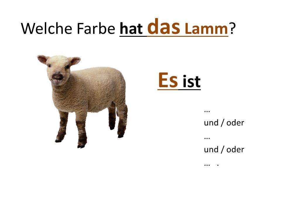 Welche Farbe hat das Lamm? Es ist … und / oder … und / oder ….