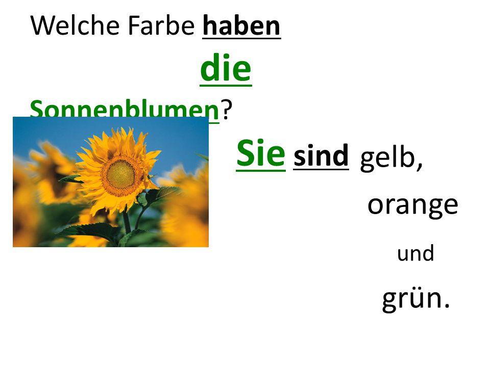Welche Farbe haben die Sonnenblumen? Sie sind gelb, orange und grün.