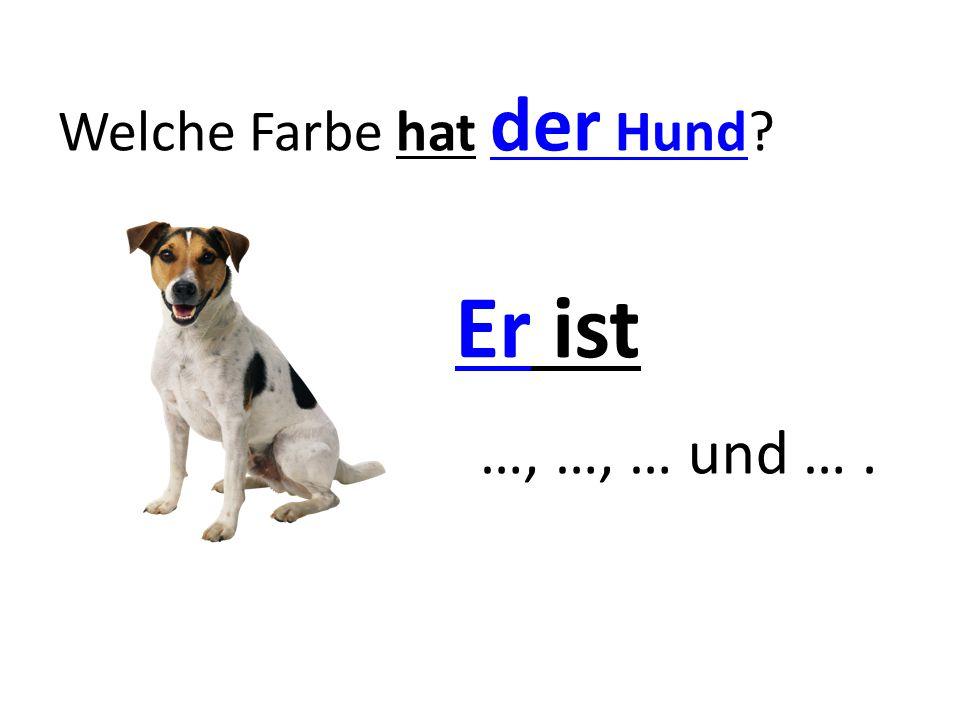 Welche Farbe hat der Hund? Er ist …, …, … und ….