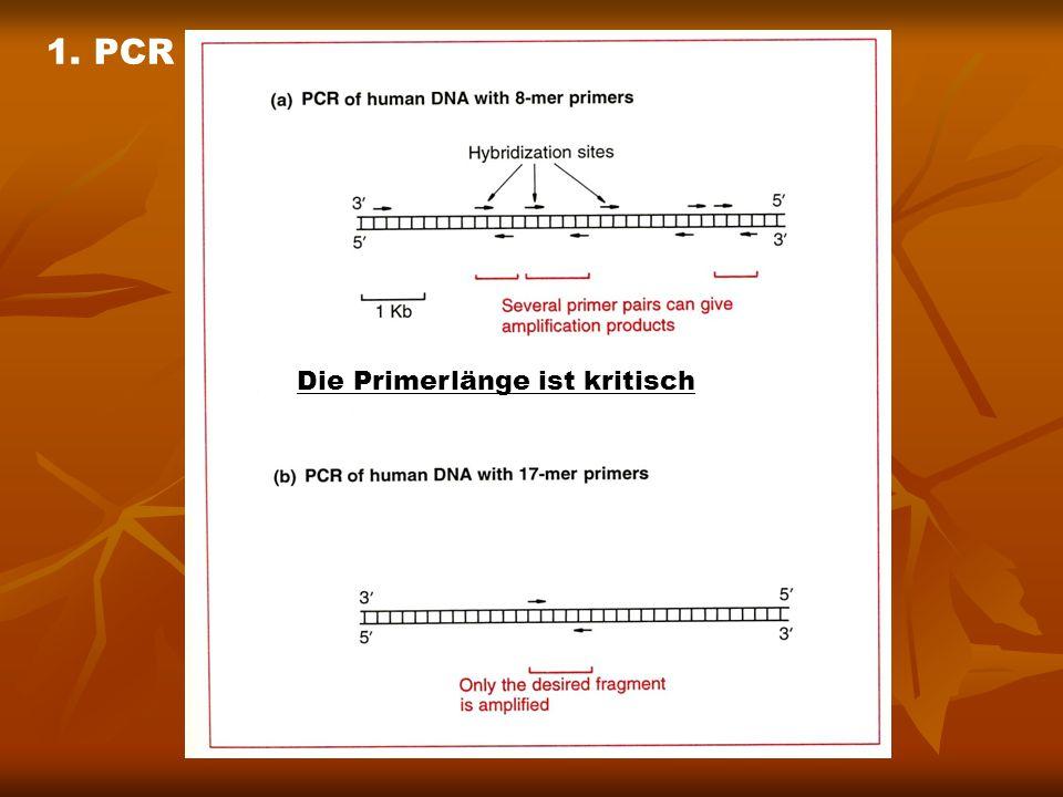 Die Primerlänge ist kritisch 1. PCR