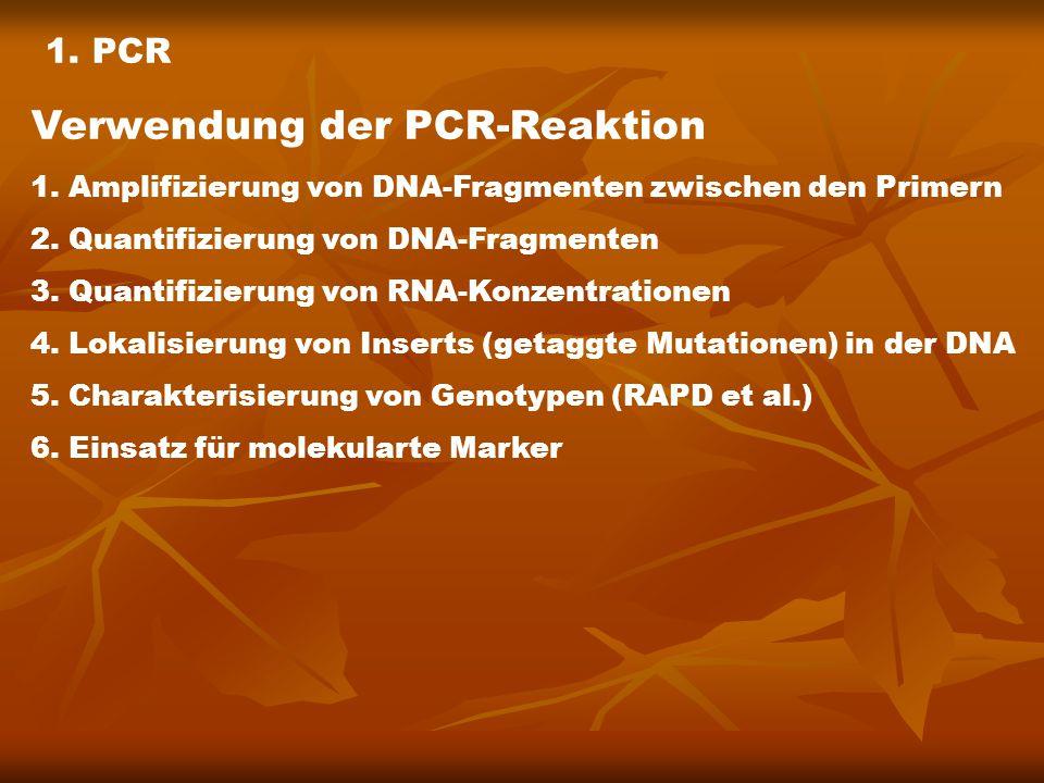 Verwendung der PCR-Reaktion 1. Amplifizierung von DNA-Fragmenten zwischen den Primern 2.