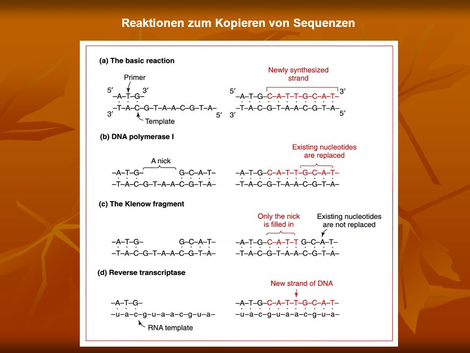 Reaktionen zum Kopieren von Sequenzen