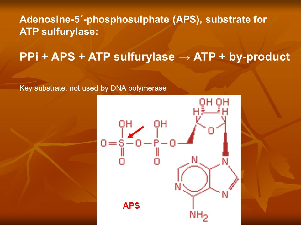 Key substrate: not used by DNA polymerase Adenosine-5´-phosphosulphate (APS), substrate for ATP sulfurylase: PPi + APS + ATP sulfurylase → ATP + by-product APS