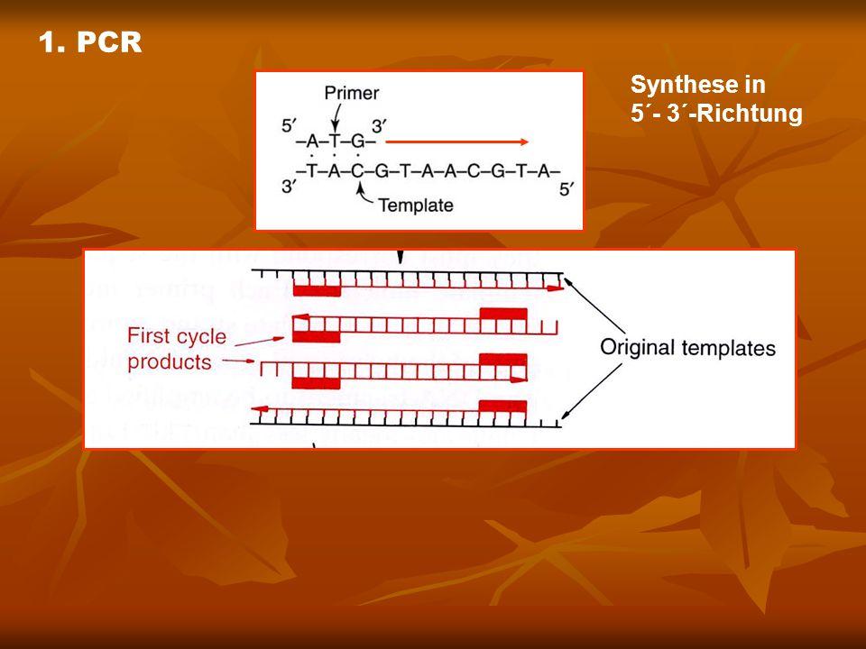 Verwendung der PCR-Reaktion 1.Amplifizierung von DNA-Fragmenten zwischen den Primern 2.