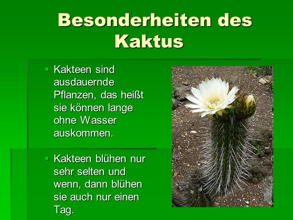 Besonderheiten des Kaktus Besonderheiten des Kaktus  Kakteen sind ausdauernde Pflanzen, das heißt sie können lange ohne Wasser auskommen.  Kakteen b