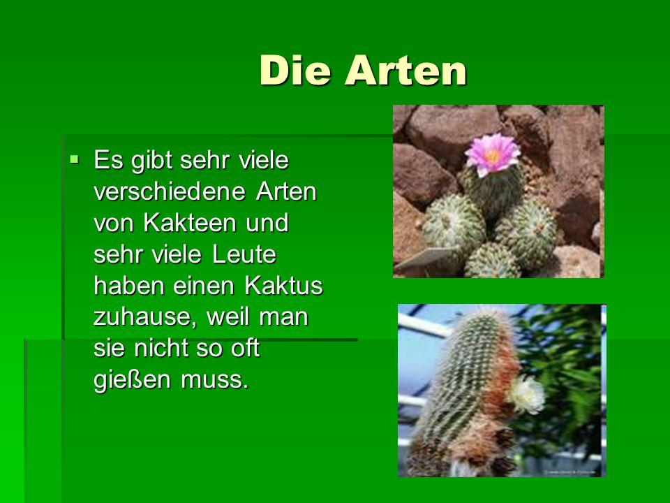 Die Arten  Es gibt sehr viele verschiedene Arten von Kakteen und sehr viele Leute haben einen Kaktus zuhause, weil man sie nicht so oft gießen muss.