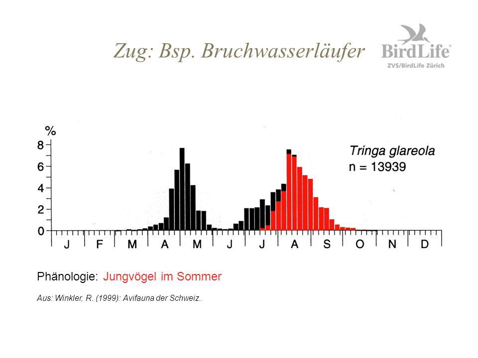 Zug: Bsp. Bruchwasserläufer Phänologie: Jungvögel im Sommer Aus: Winkler, R. (1999): Avifauna der Schweiz.