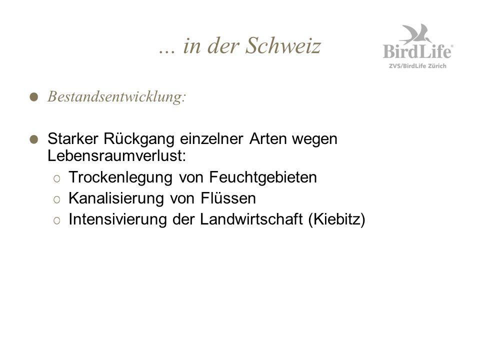 ... in der Schweiz Bestandsentwicklung: Starker Rückgang einzelner Arten wegen Lebensraumverlust: Trockenlegung von Feuchtgebieten Kanalisierung von F