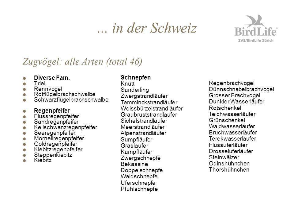 ... in der Schweiz Diverse Fam. Triel Rennvogel Rotflügelbrachschwalbe Schwarzflügelbrachschwalbe Regenpfeifer Flussregenpfeifer Sandregenpfeifer Keil