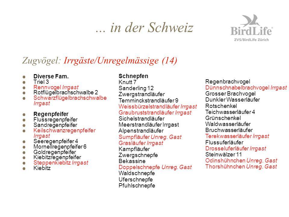... in der Schweiz Diverse Fam. Triel 3 Rennvogel Irrgast Rotflügelbrachschwalbe 2 Schwarzflügelbrachschwalbe Irrgast Regenpfeifer Flussregenpfeifer S
