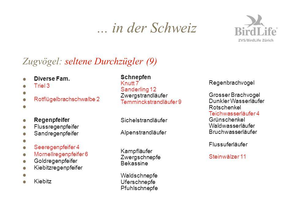 ... in der Schweiz Diverse Fam. Triel 3 Rotflügelbrachschwalbe 2 Regenpfeifer Flussregenpfeifer Sandregenpfeifer Seeregenpfeifer 4 Mornellregenpfeifer