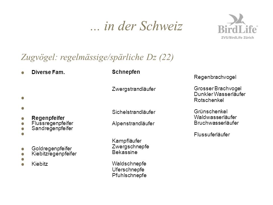 ... in der Schweiz Diverse Fam. Regenpfeifer Flussregenpfeifer Sandregenpfeifer Goldregenpfeifer Kiebitzregenpfeifer Kiebitz Zugvögel: regelmässige/sp