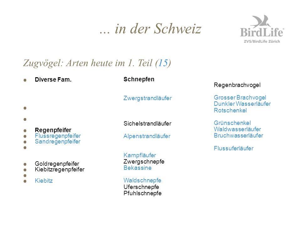 ... in der Schweiz Diverse Fam. Regenpfeifer Flussregenpfeifer Sandregenpfeifer Goldregenpfeifer Kiebitzregenpfeifer Kiebitz Zugvögel: Arten heute im